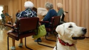 terapia-perros-geron--644x362