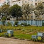 algunas-las-parcelas-cultivadas-del-huerto-urbano-del-distrito-eixample-entre-las-calles-padilla-enamorats-consell-cent-pasado-lunes-1351016243478