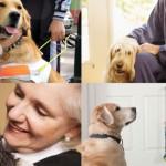 perros-terapia
